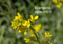 Evangelio del día Y Lecturas de hoy, domingo, 6 de octubre de 2019