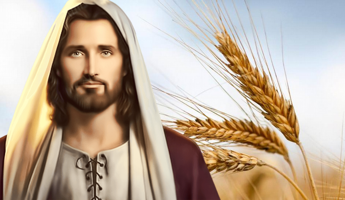 Evangelio - 12 de Junio de 2020