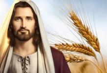 Evangelio y Comentario de hoy: Viernes, 29 de Enero